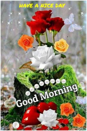 Good-morning-image-red-rose