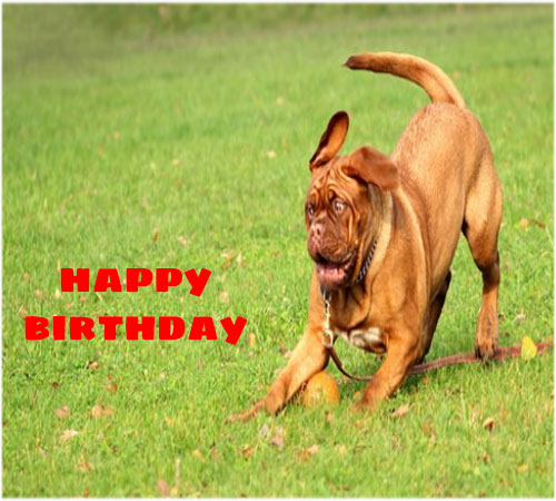 Funny happy birthday images free hd download