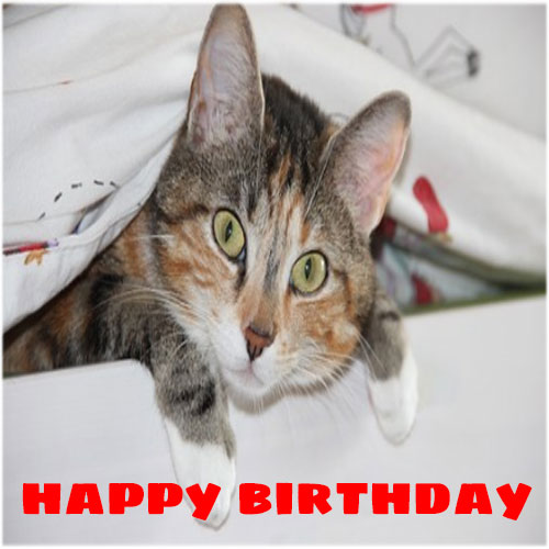 Happy birthday images picture pics photo funny hd download