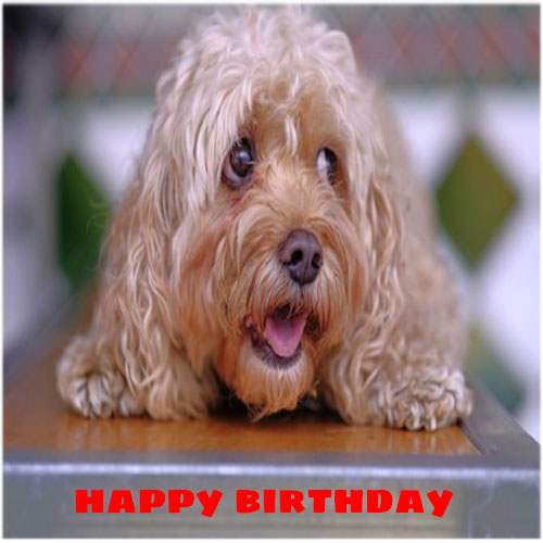Happy birthday images funny free hd download