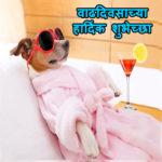 funny birthday wishes in marathi - मजेदार बर्थडे कोट्स